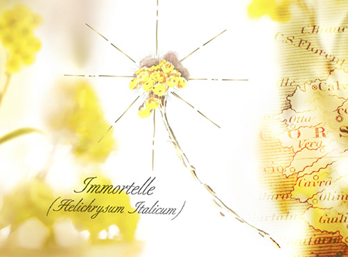 THE IMMORTELLE